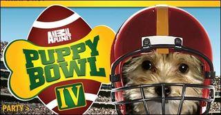 Puppy_bowl